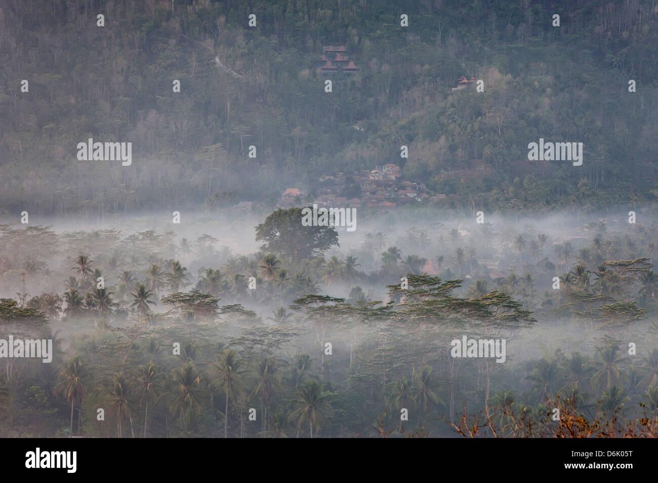 Wald in Java, Indonesien, Südostasien, Asien Stockbild