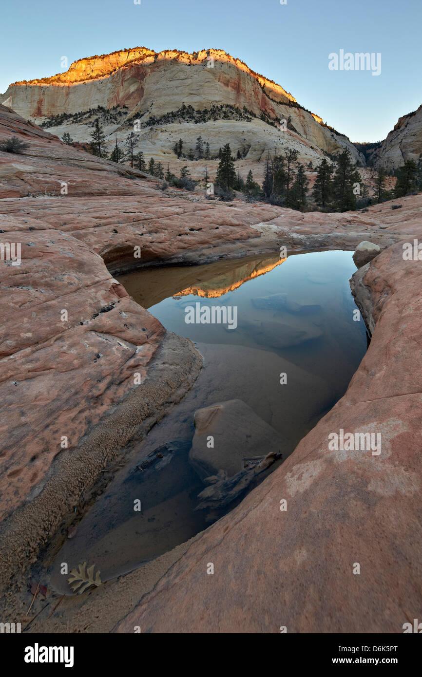Pool im glatten Felsen reflektieren erste Licht auf einem Sandstein Hügel, Zion Nationalpark, Utah, Vereinigte Stockbild