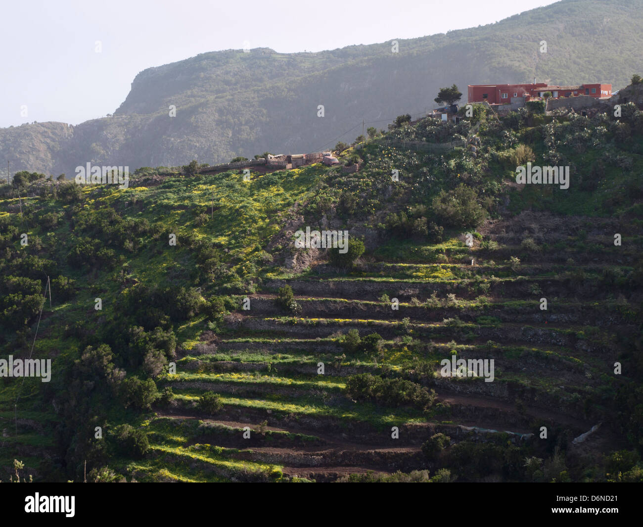 Terrassenförmig angelegten Feldern mit Bauernhäusern oben auf einem steilen Bergrücken, Teno Alto Berge in Teneriffa Stockfoto