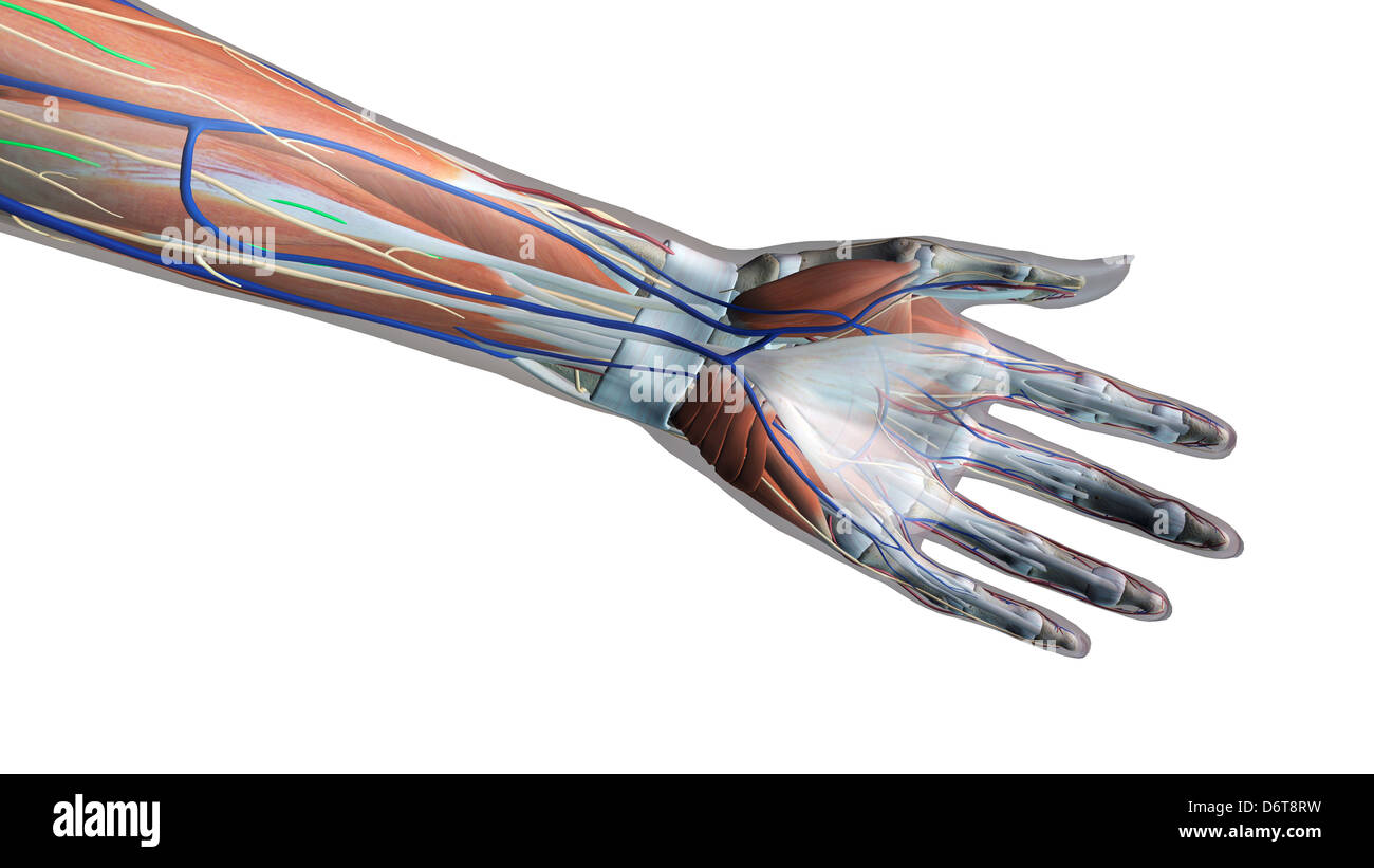 Xray Hand Vein Stockfotos & Xray Hand Vein Bilder - Alamy