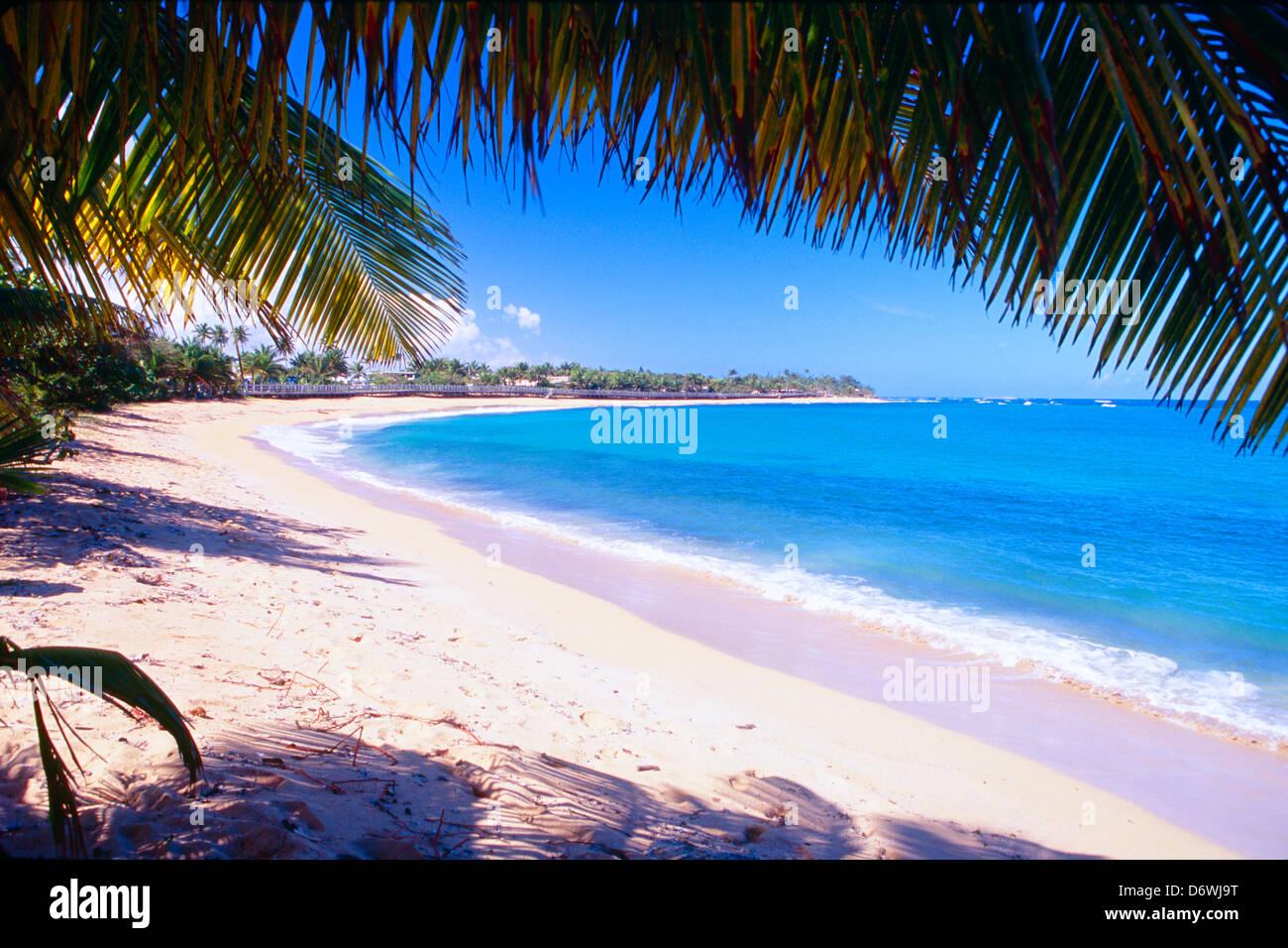 Puerto Rico Pinones Strandblick Unter Palme Stockfoto Bild