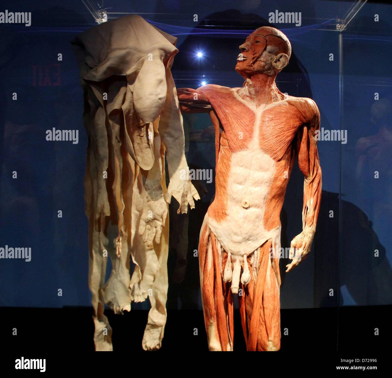 Körper Nach Dem Tod Verkaufen