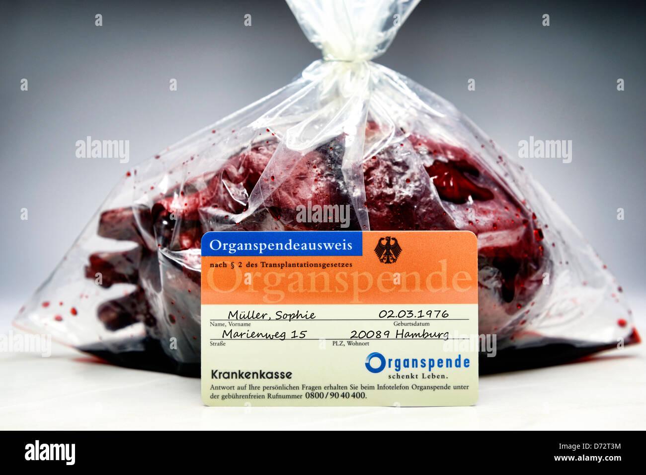 Herz und Organ Spende Personalausweis, symbolische Foto-Organ-Spende-Skandal Stockbild