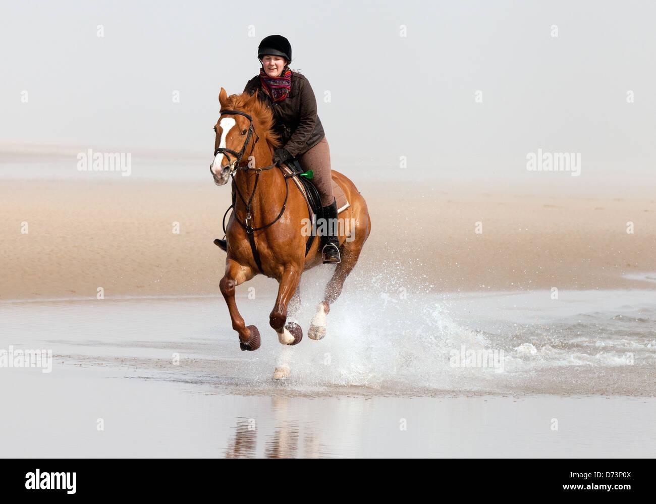 Ein Mädchen reiten ihr Pferd im Galopp auf Holkham Beach, Norfolk Küste East Anglia UK Stockbild