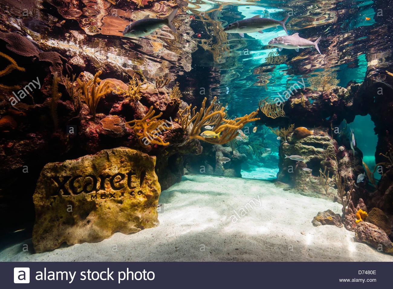 Korallenriff-Aquarium, Xcaret Park (Eco-archäologischen Themenpark), Riviera Maya, Quintana Roo, Mexiko Stockbild