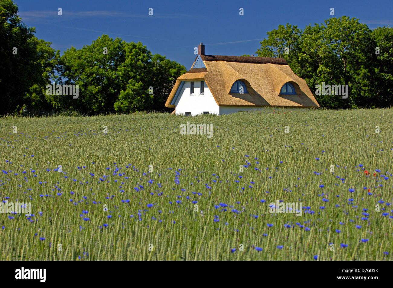 Deutschland, Mecklenburg-Vorpommern, Insel Ruegen, Dach Maden von reed Stockbild