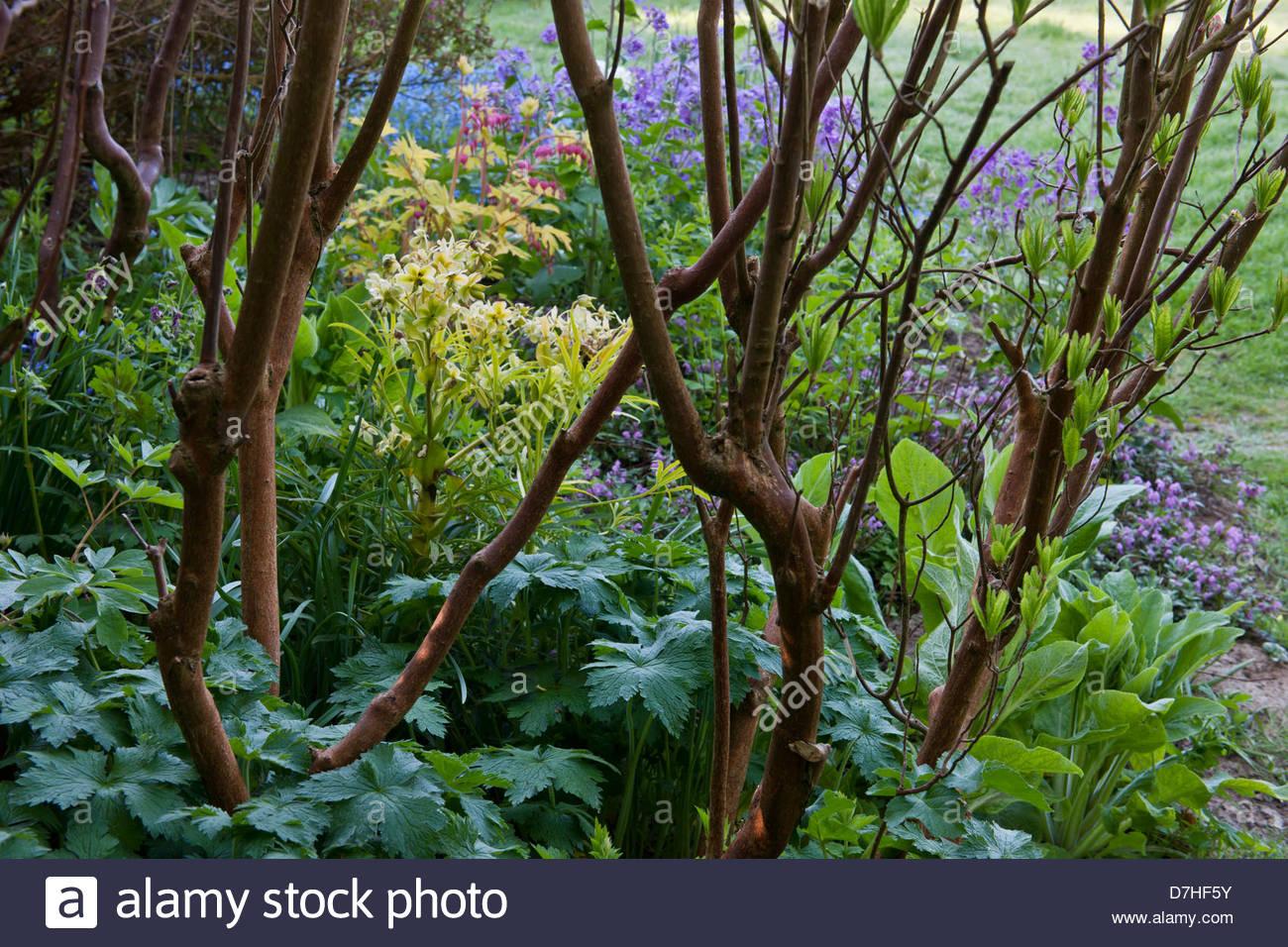 Schattenliebende Pflanzen schatten liebende pflanzen unter angehobenen stiele azaleen geranium