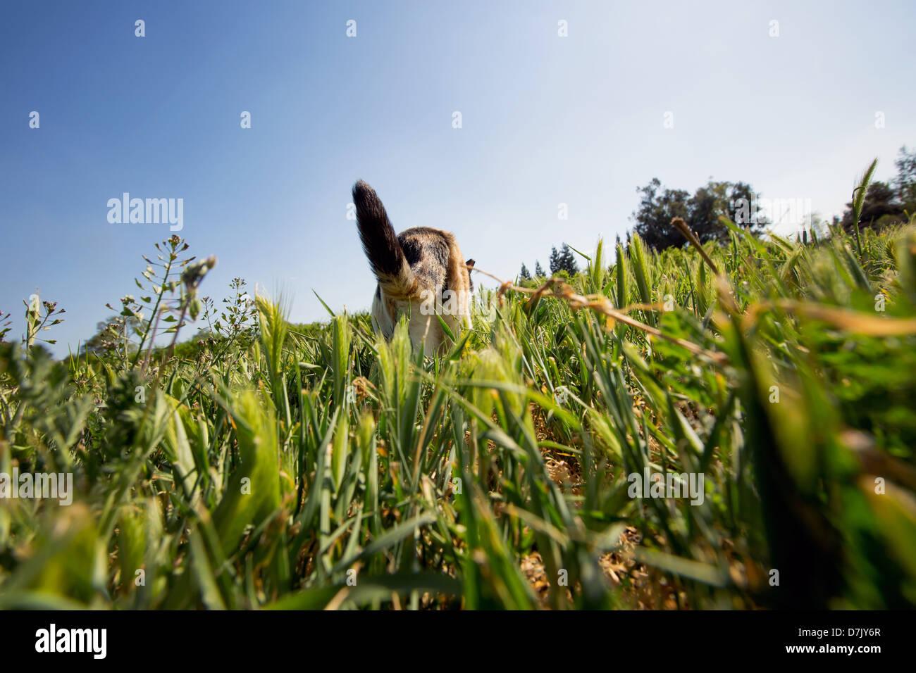 Niedrigen Winkel und Rückansicht der Katze schlich in der Natur auf dem Gelände des Katzenhaus auf die Stockbild