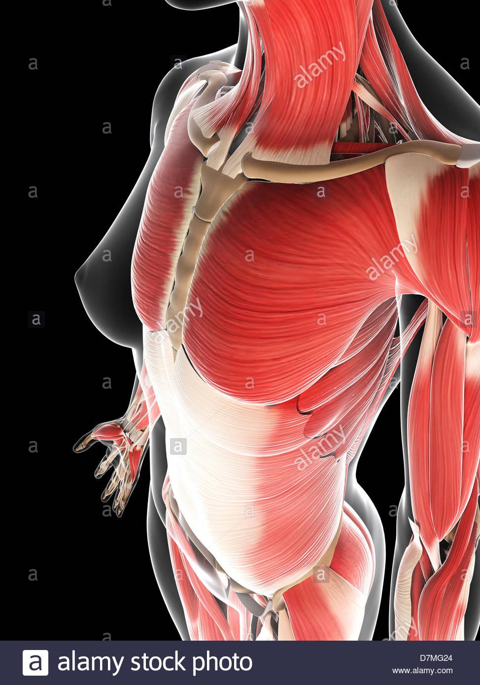 Ziemlich Shin Muskelanatomie Fotos - Anatomie Von Menschlichen ...