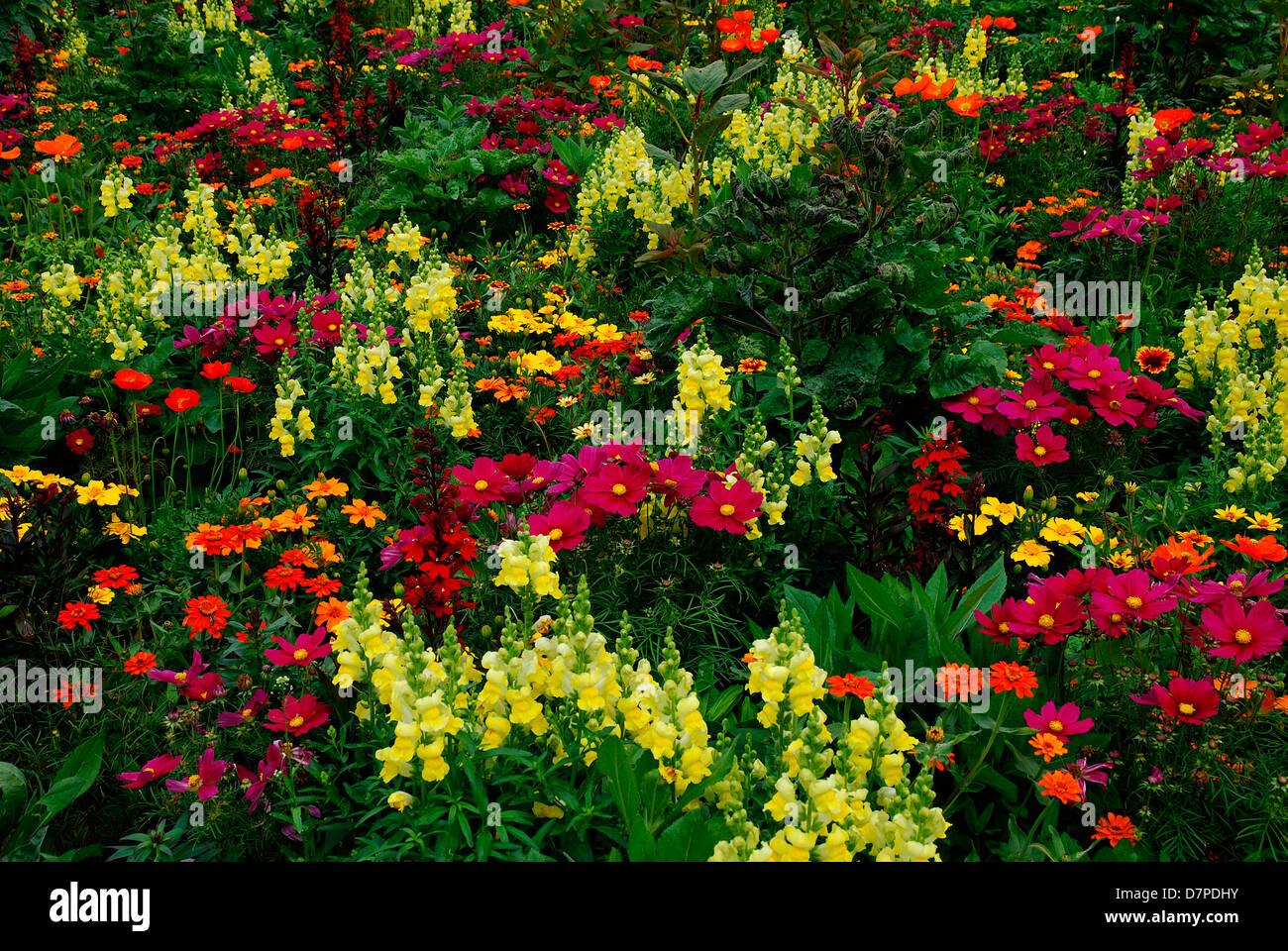bunter blumengarten mit verschiedenen blumen gemischte arten blumengarten buntgemischt mit. Black Bedroom Furniture Sets. Home Design Ideas