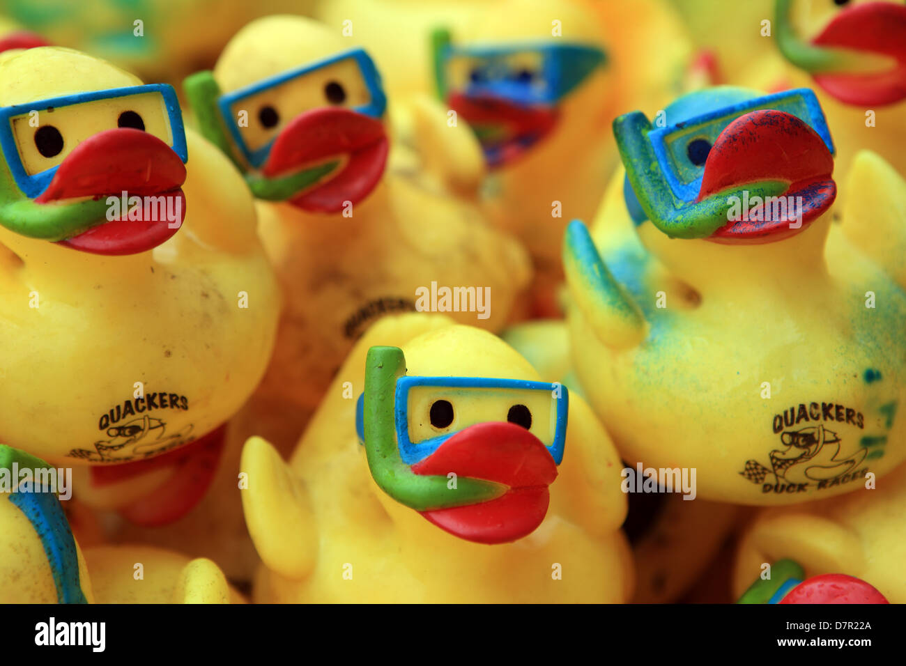 Gelbe Plastikenten mit Schnorchel und Masken auf bereit für ein Benefiz-Entenrennen Stockbild