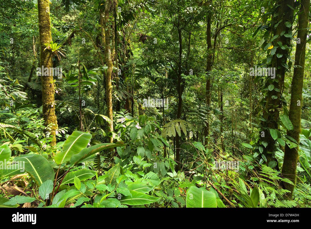 Dschungel am Arenal Hängebrücken wo Regenwald über Gehwege, La Fortuna, Provinz Alajuela, Costa Rica Stockbild
