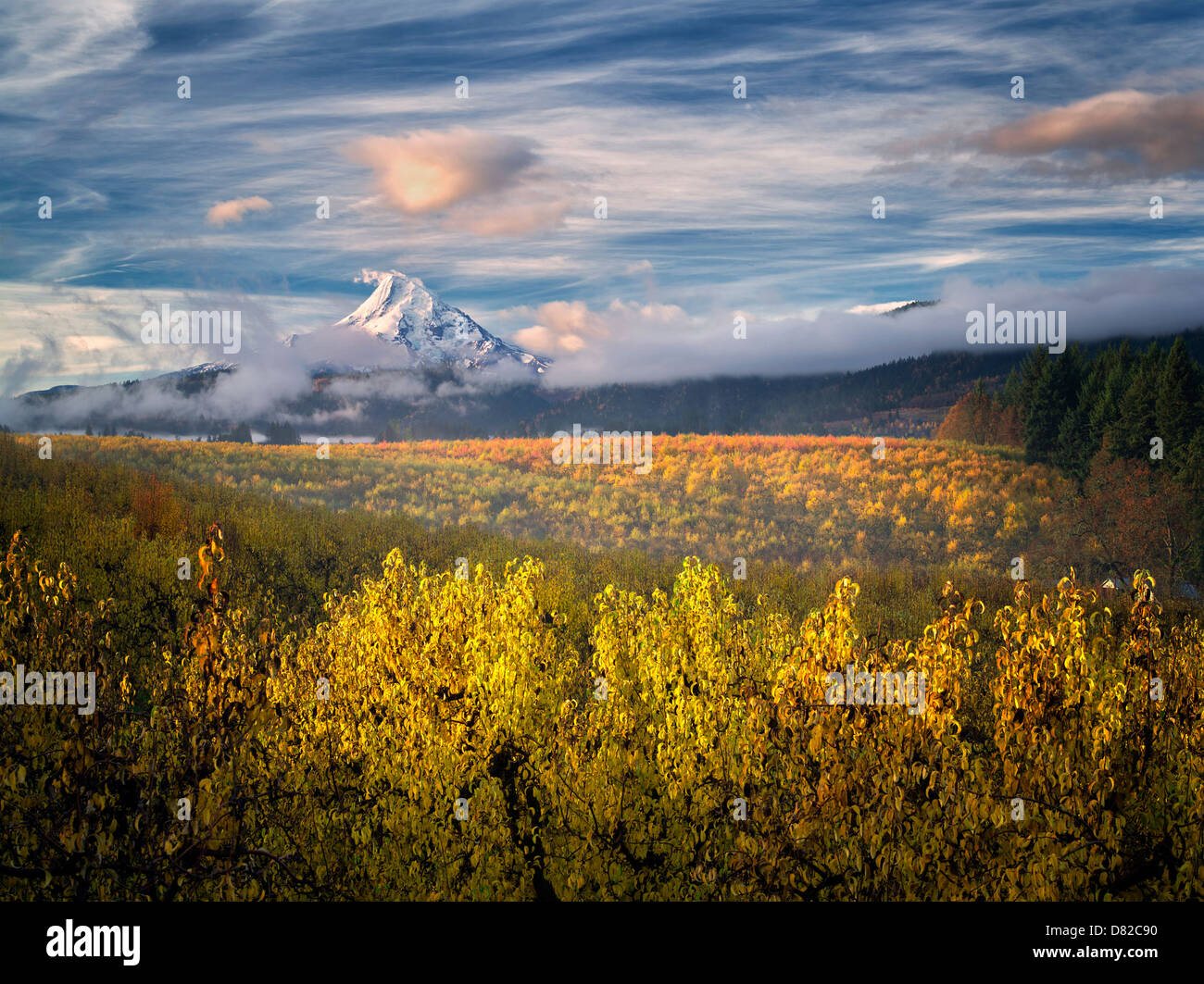Birnengarten in Herbstfarben und Mt. Hood. Hood River Valley, Oregon Stockbild