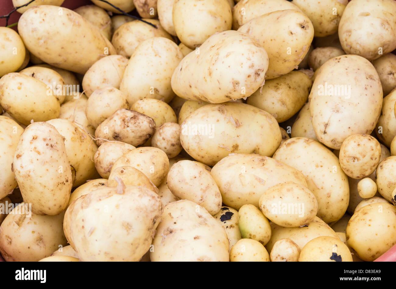 Frisch geerntete Kartoffeln auf dem Display auf dem Markt Stockbild