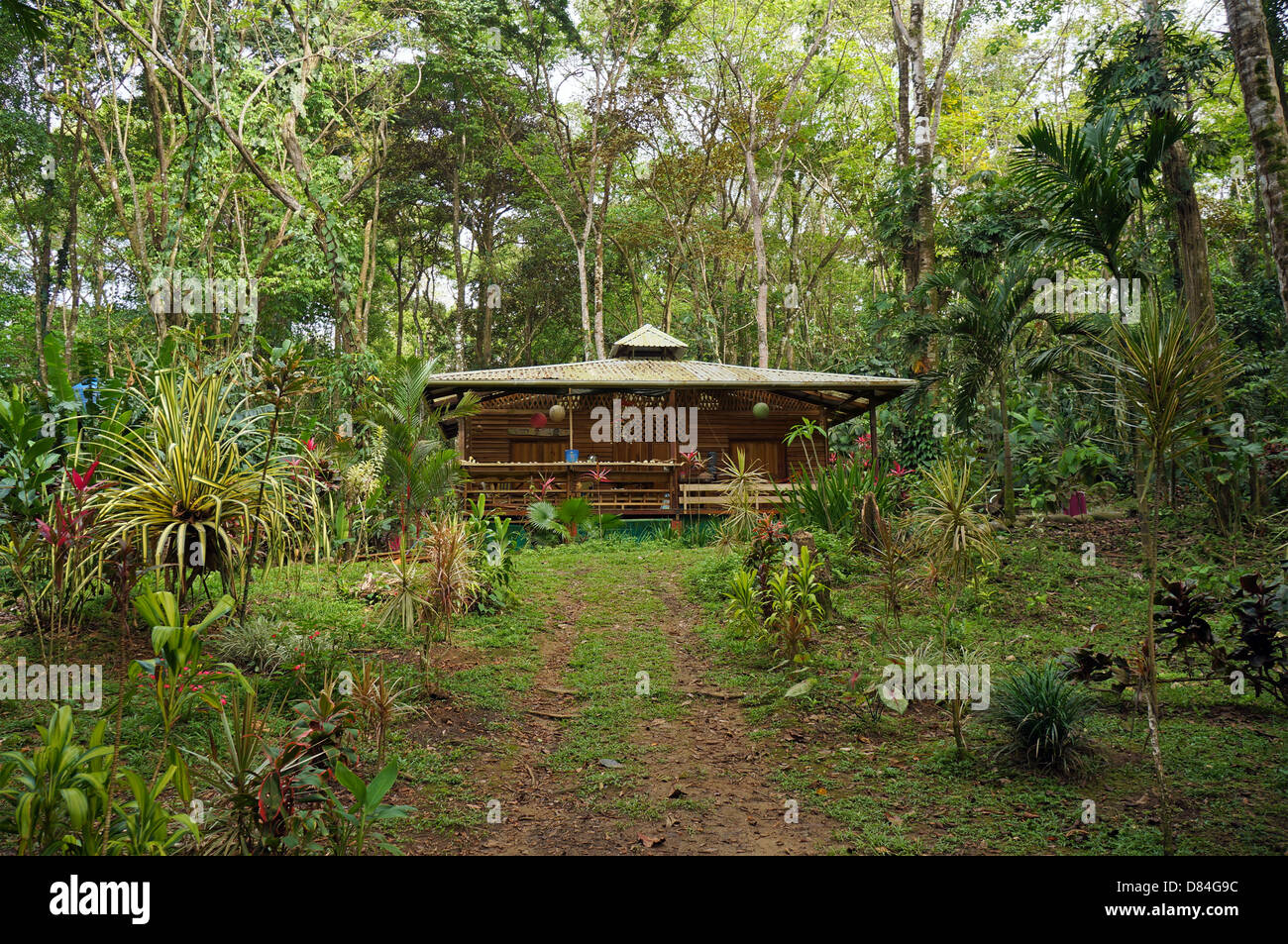 forest tree house jungle stockfotos forest tree house jungle bilder alamy. Black Bedroom Furniture Sets. Home Design Ideas