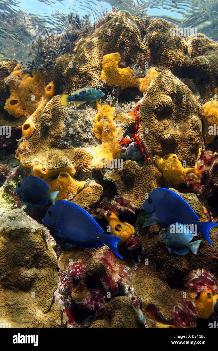 Lebendigen Farben der Korallenriff mit Fischen, Röhrenwürmer und ...