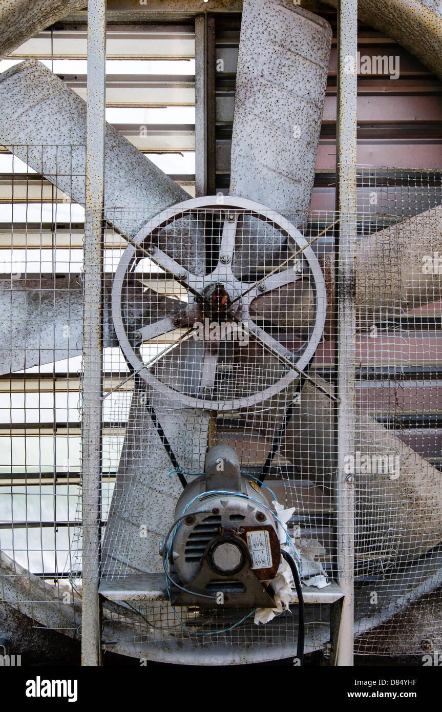 Industriegebläse innerhalb eines Gewächshauses. Arkansas, USA. Stockbild