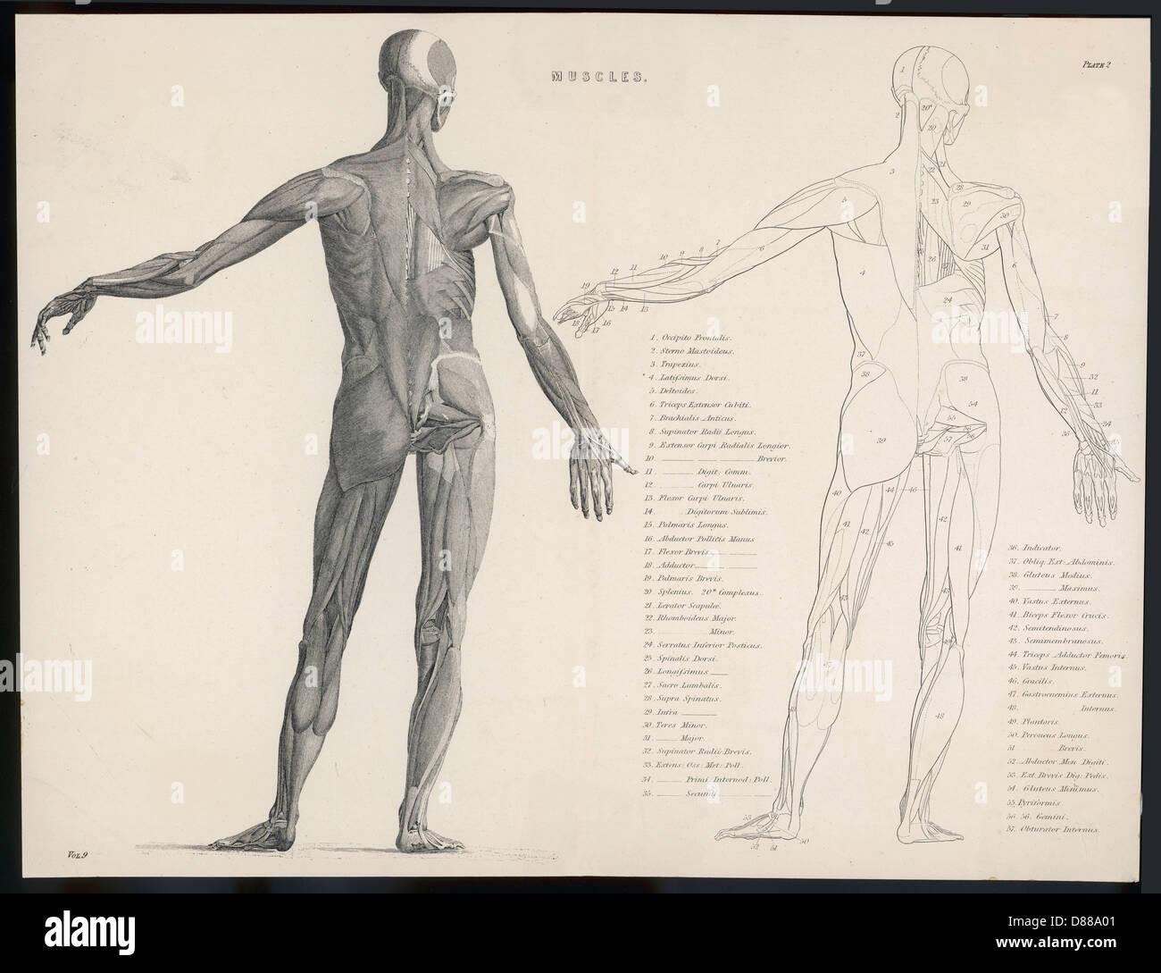 Erfreut Körperbewegung Anatomie Ideen - Anatomie Von Menschlichen ...
