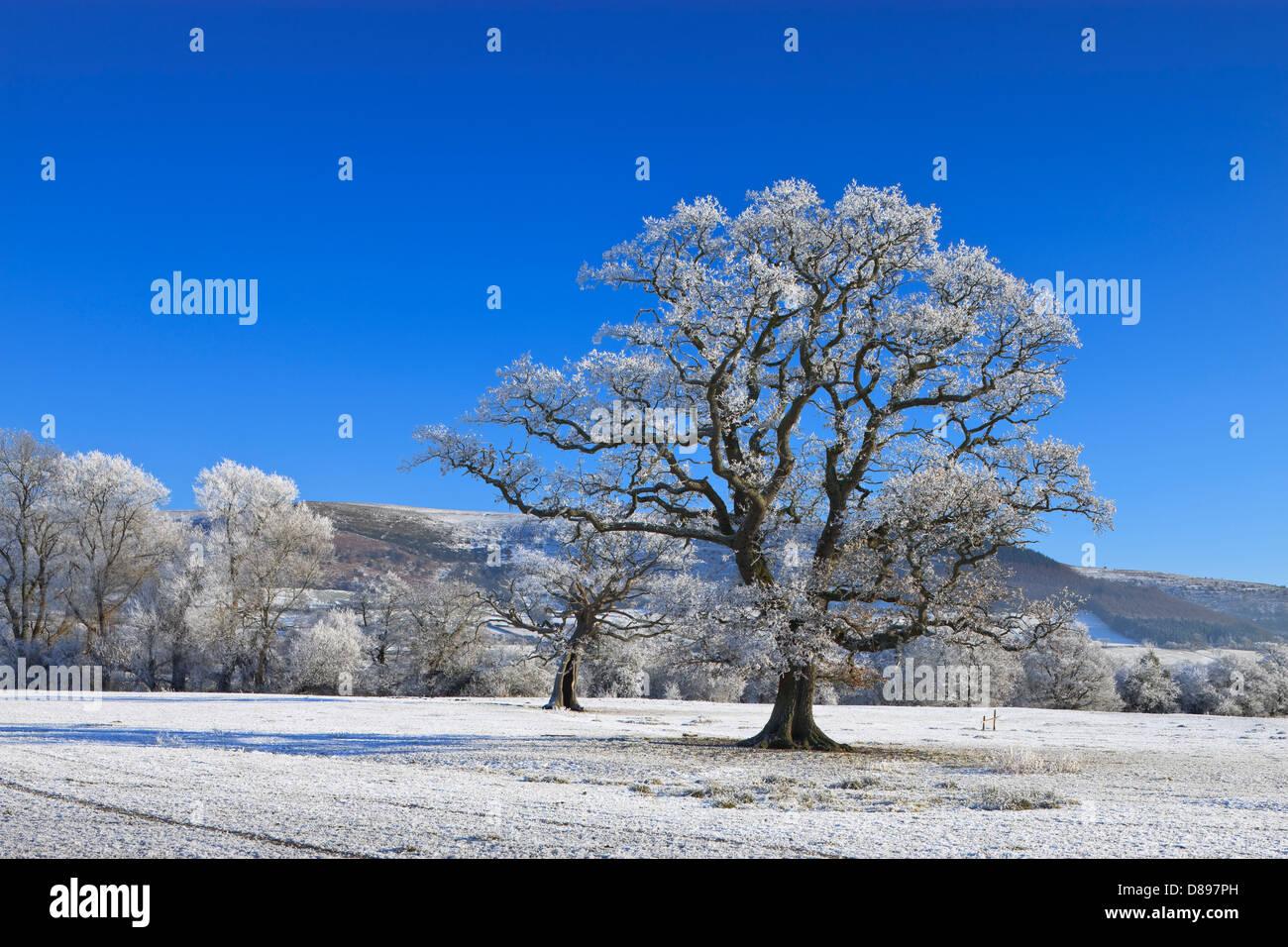 Ländlichen Brecon Beacons Powys Wales im winter Stockbild