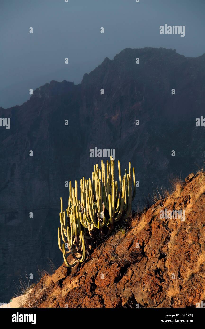 Klippen von Los Gigantes auf Teneriffa, Kanarische Inseln Stockbild