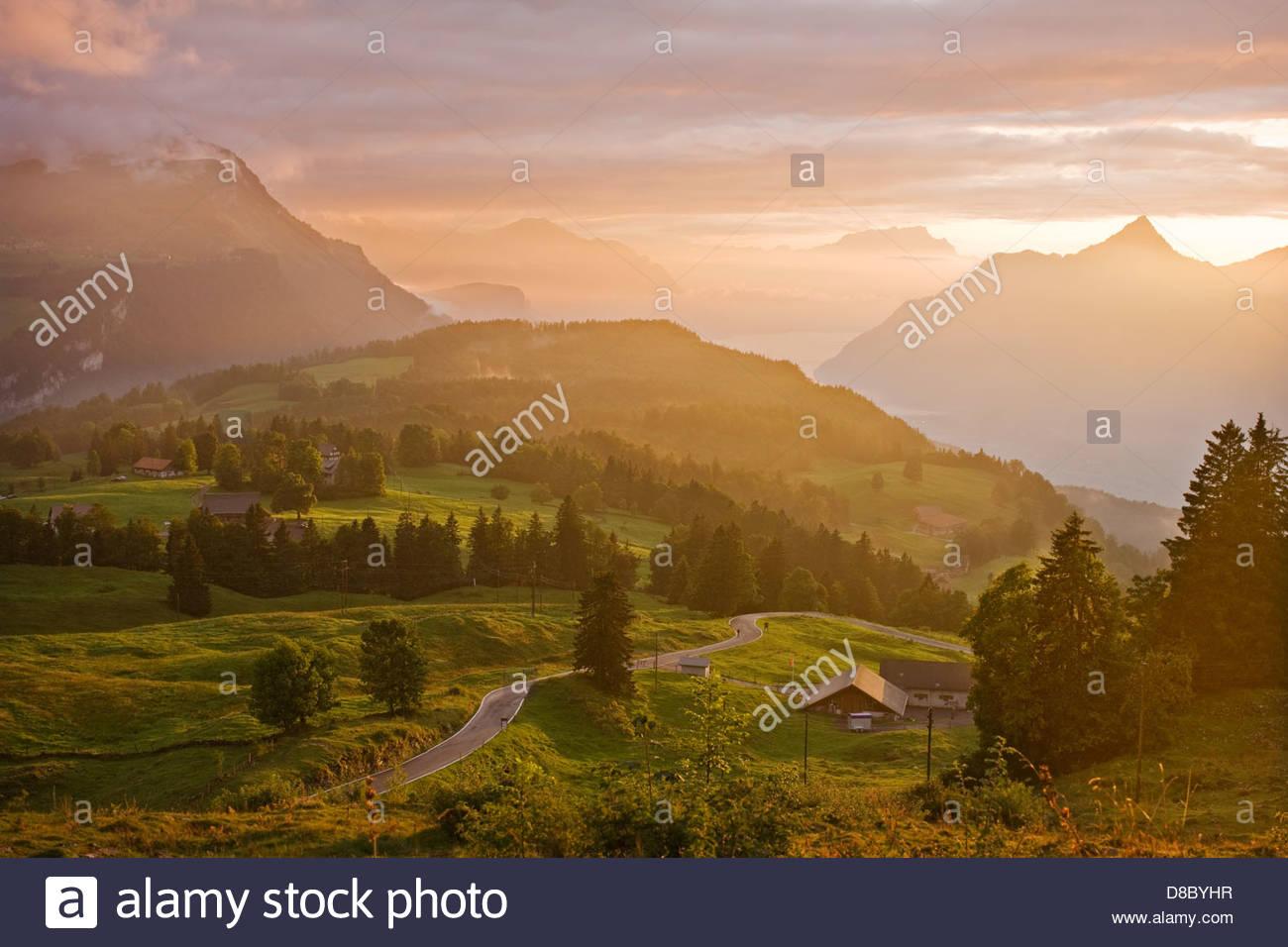 Baum in einem Wald mit einer Bergkette im Hintergrund, Schwyz, Schweiz Stockbild