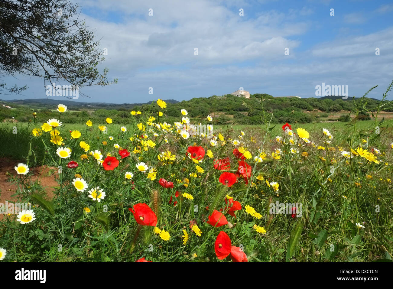 mohn und blumen auf einer wiese in menorca im fr hjahr stockfoto bild 56830949 alamy. Black Bedroom Furniture Sets. Home Design Ideas
