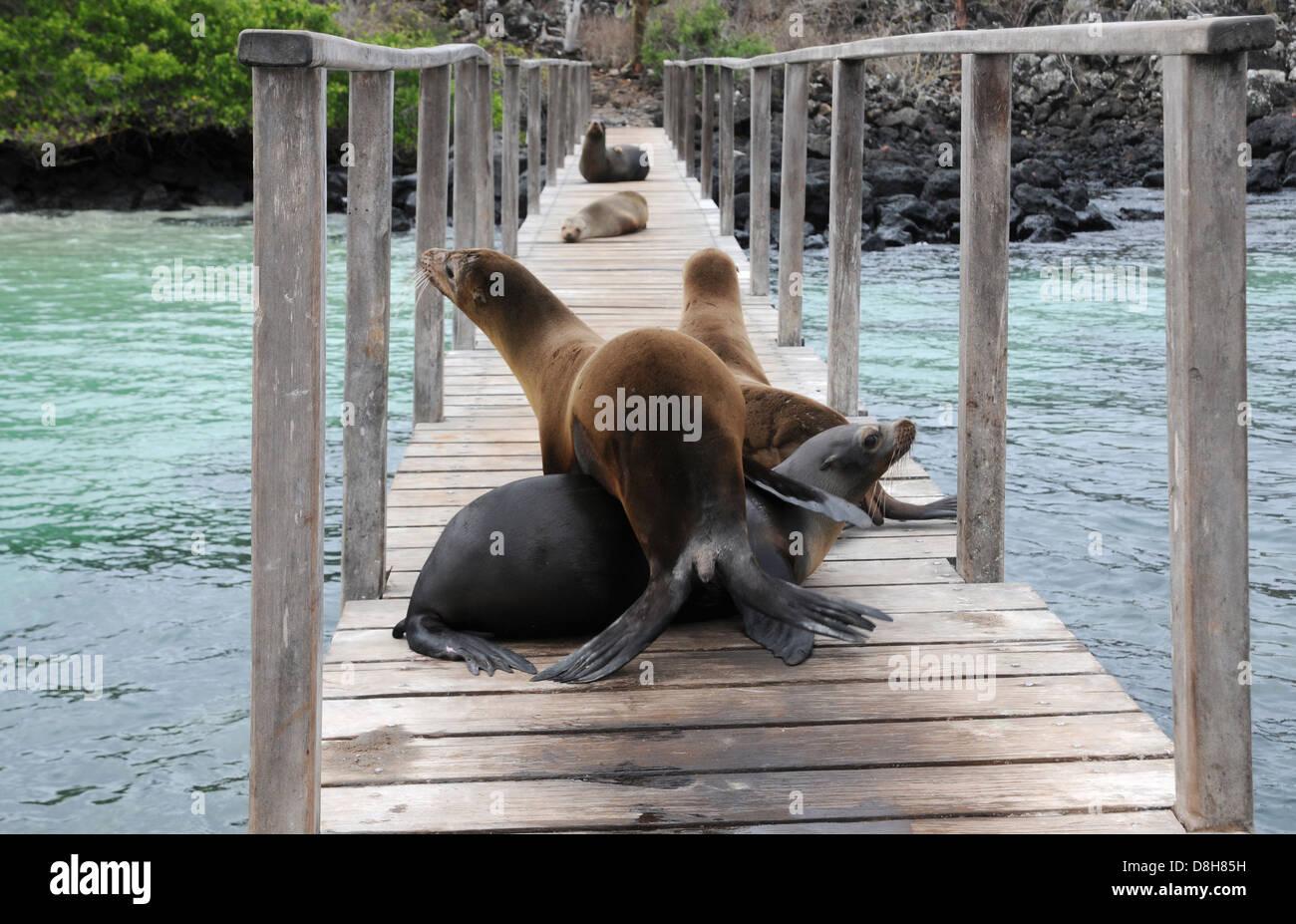 Willkommen auf Galapagos Stockbild