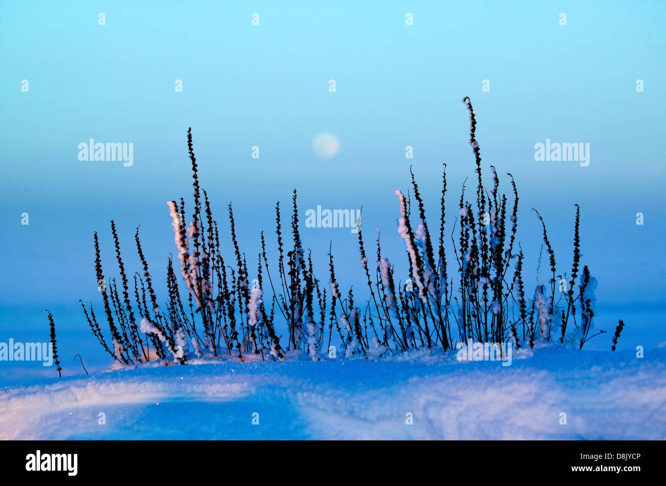 Letzten Winterlicht und aufgehenden Mond am Moskjæra im See Vansjø, Råde Kommune, Østfold Fylke, Stockbild