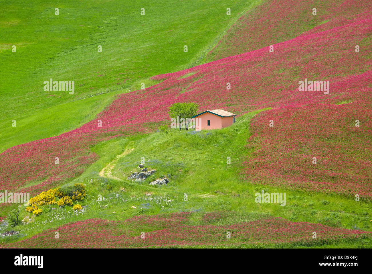 Sizilien Frühlingslandschaft mit Blumen und Wiese im zentralen Sizilien, Italien Stockbild