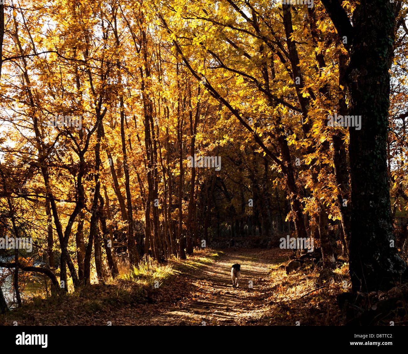 Paisaje, Landschaft, Landschaft, Szene Stockbild