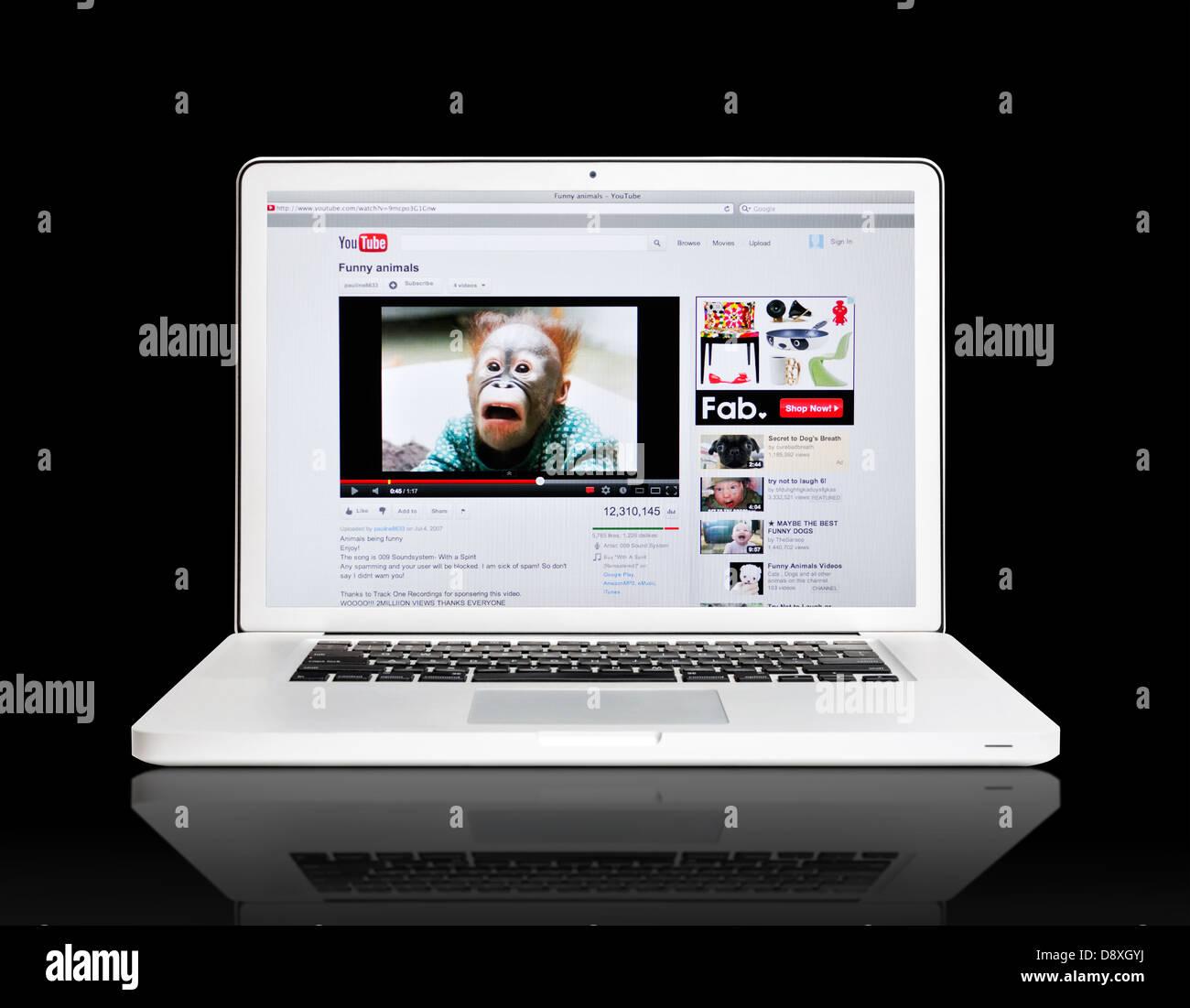 Youtube Website Auf Laptop Lustige Tiere Video Stockfoto Bild