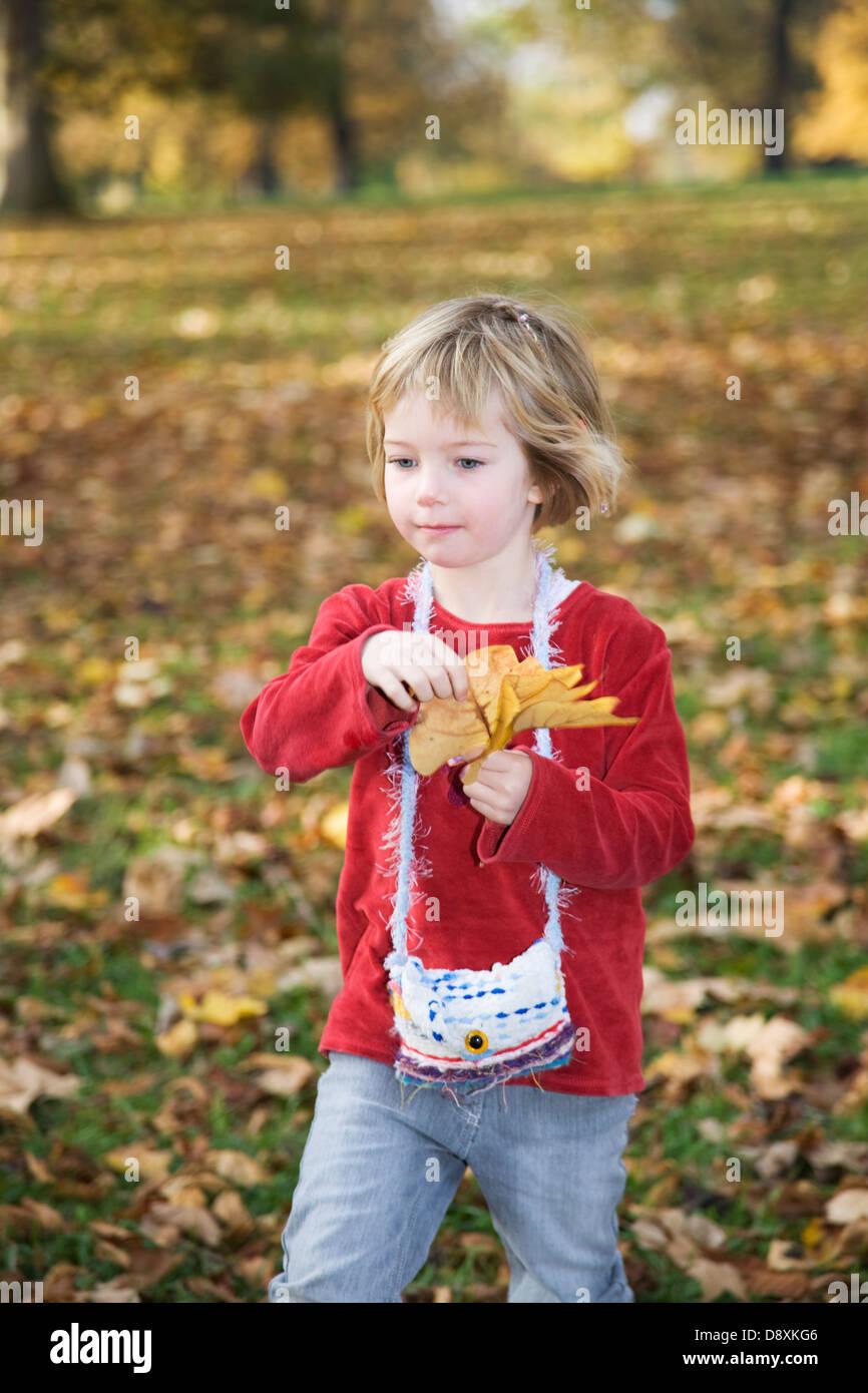 Fünf Jahre altes Mädchen sammeln Blätter im Herbst Stockbild