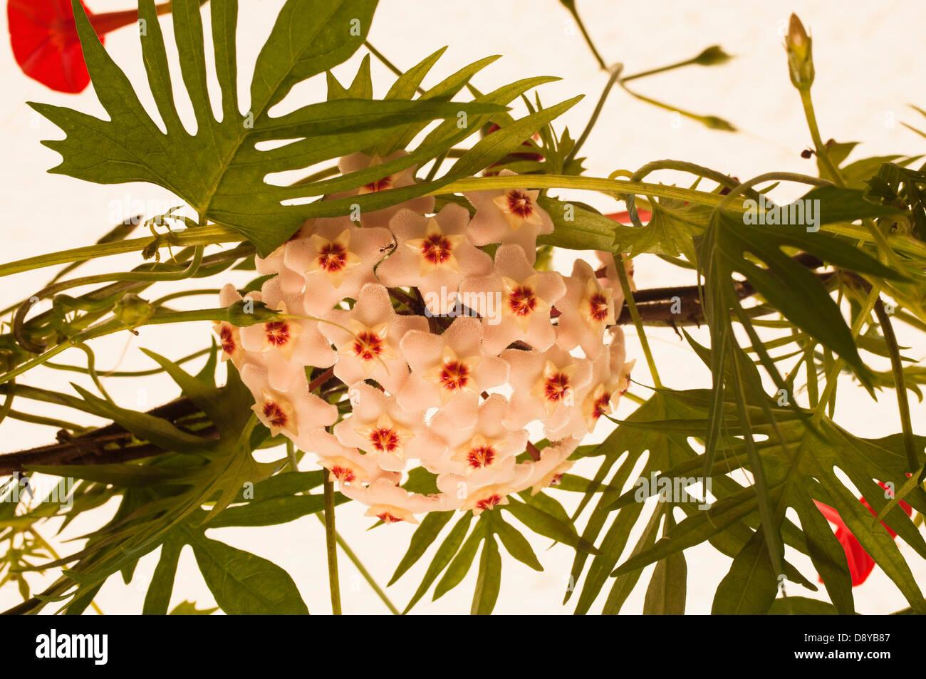 Nett Frühlingsblumen Die Blätter Färben Fotos - Malvorlagen Von ...
