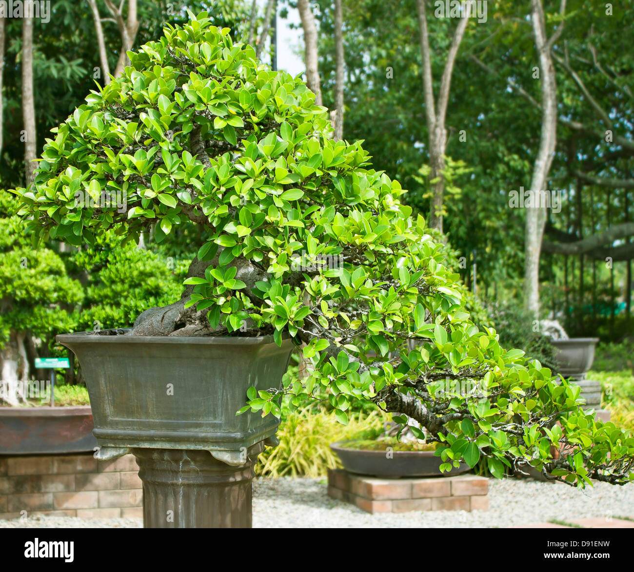 trees in pots stockfotos trees in pots bilder alamy. Black Bedroom Furniture Sets. Home Design Ideas