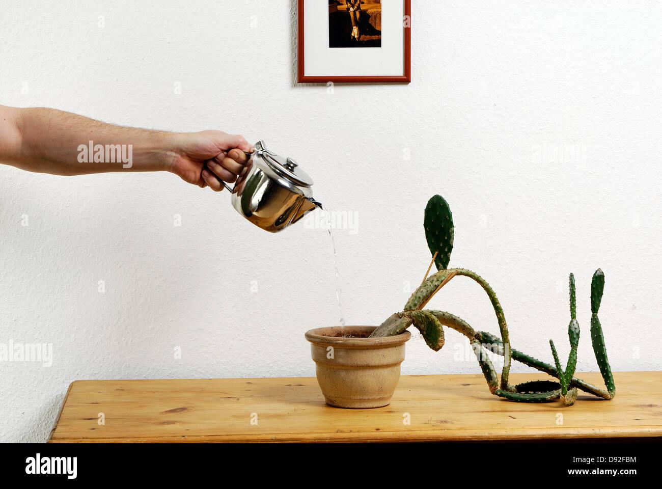 Ein Kaktus auf einem Brett Stockbild