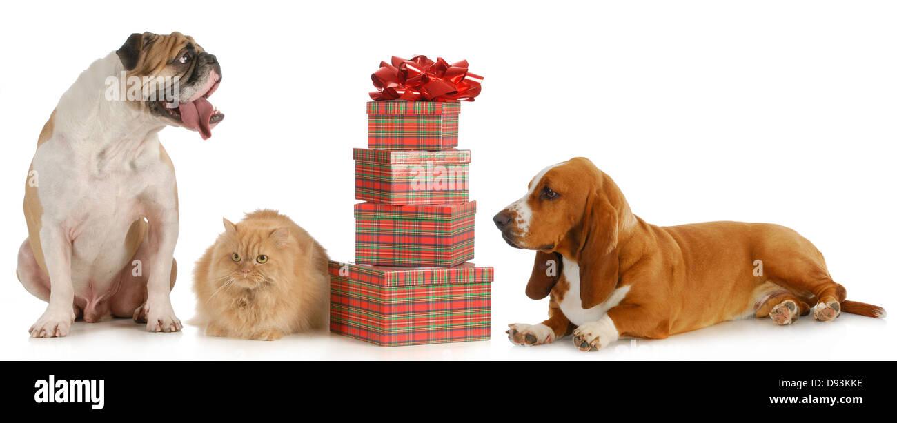 Weihnachten-Haustier - zwei Hunde und eine Katze sitzt neben einem ...