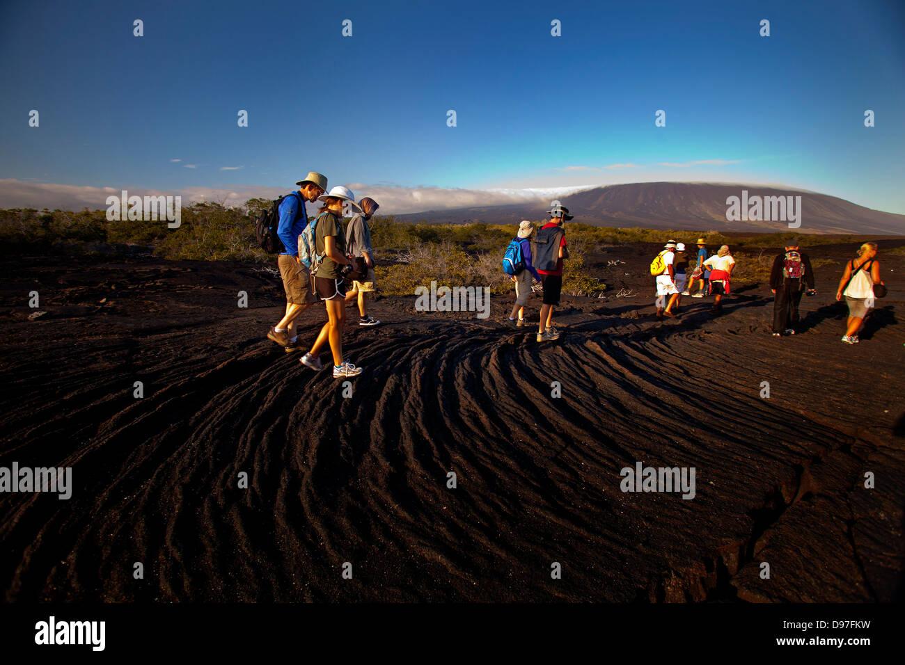Touristen, die zu Fuß auf die Lava fließen bei Punta Espinozo, Fernandina Insel, Galapagos Stockbild