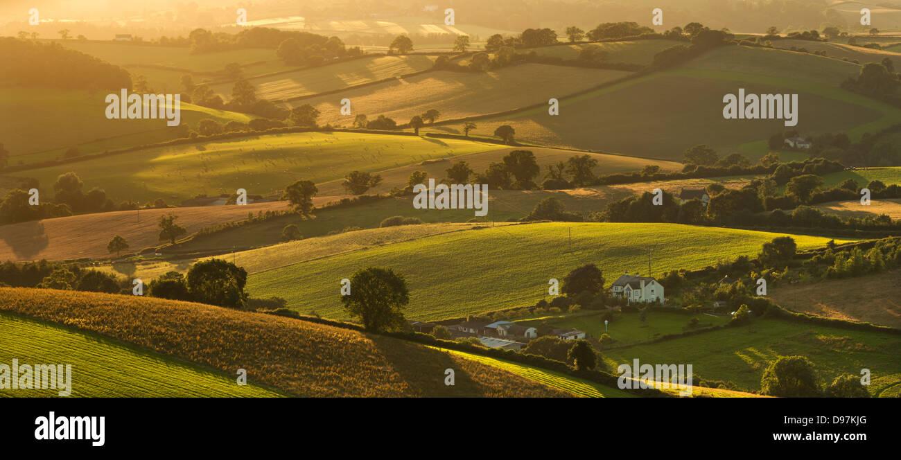 Eine hügelige Landschaft in der Sommerzeit, Nr Crediton, Devon, England. (Juli) im Sommer 2012. Stockbild
