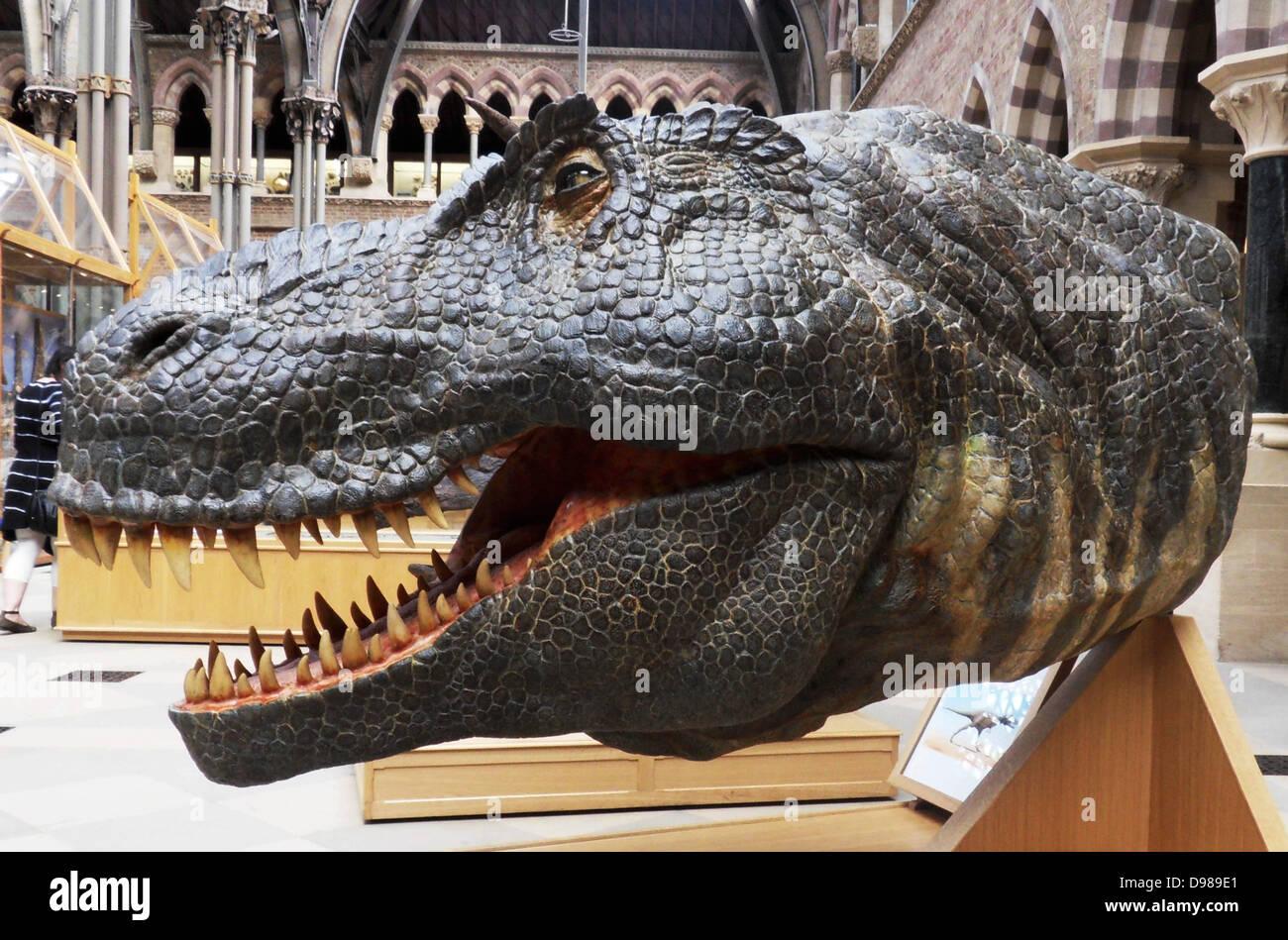 Rekonstruktion des Kopfes von der späten Kreidezeit Dinosaurier Tyrannosaurus rex Stockbild