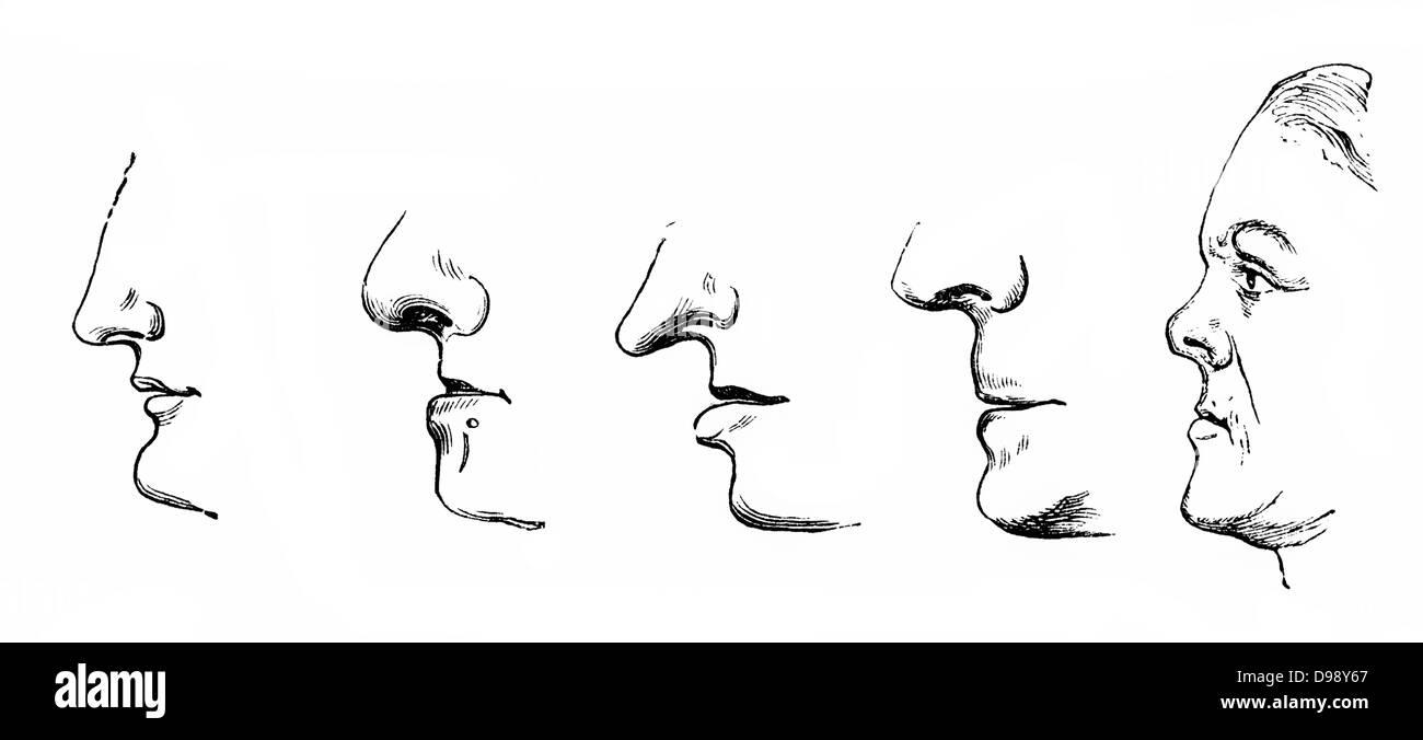 Menschliche Nase Stockfotos & Menschliche Nase Bilder - Alamy