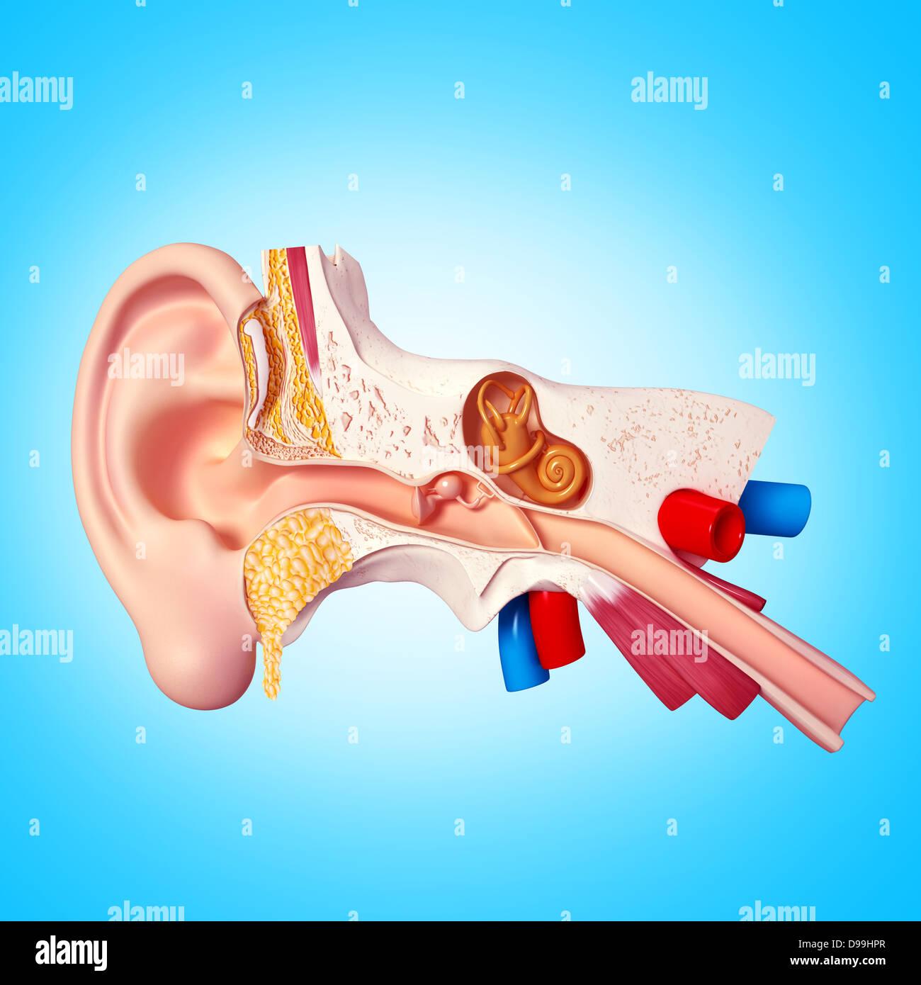 Ausgezeichnet Anatomie Physiologie Und Krankheits Arbeitsmappe ...