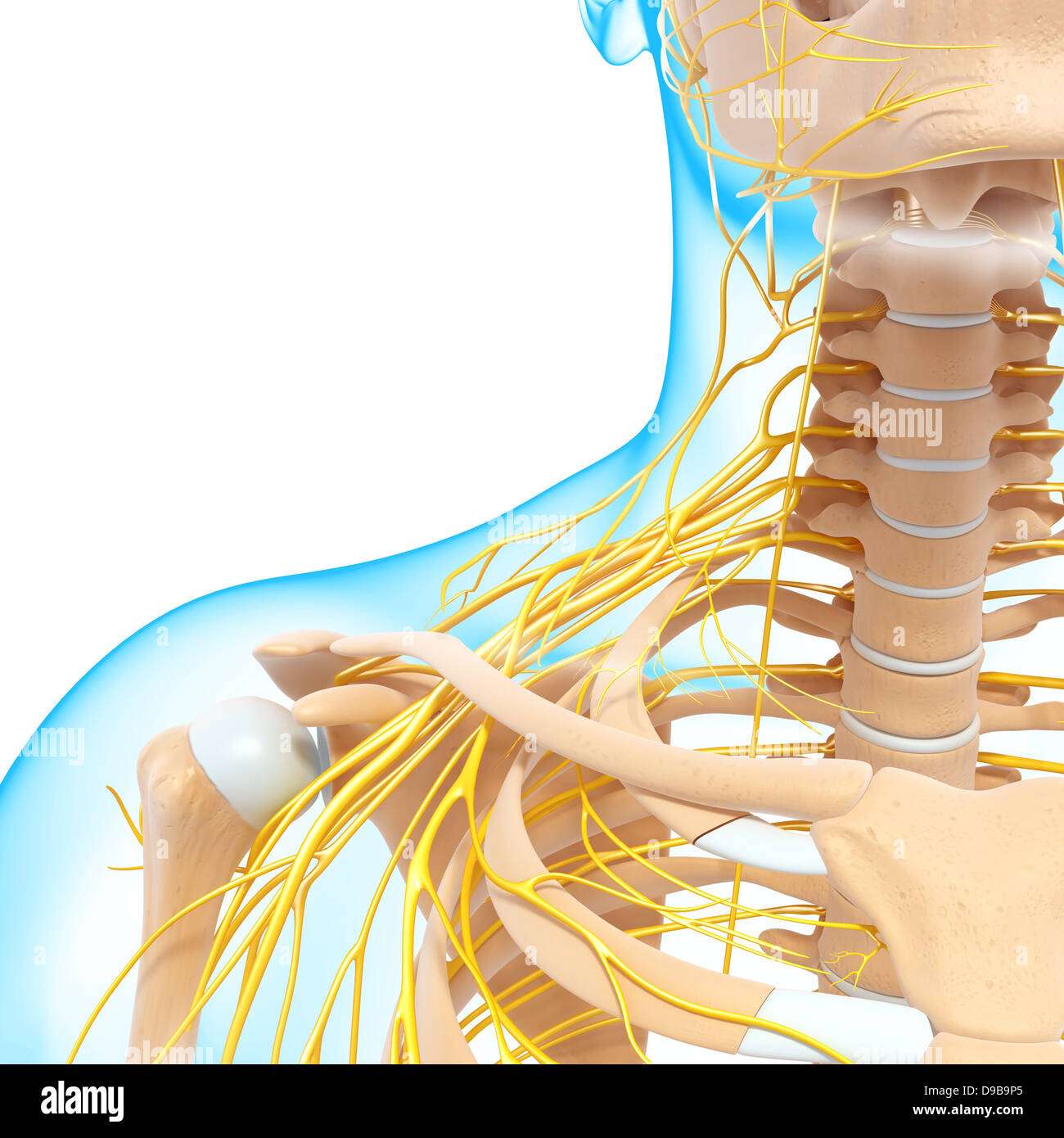 Nervous System Stockfotos & Nervous System Bilder - Alamy
