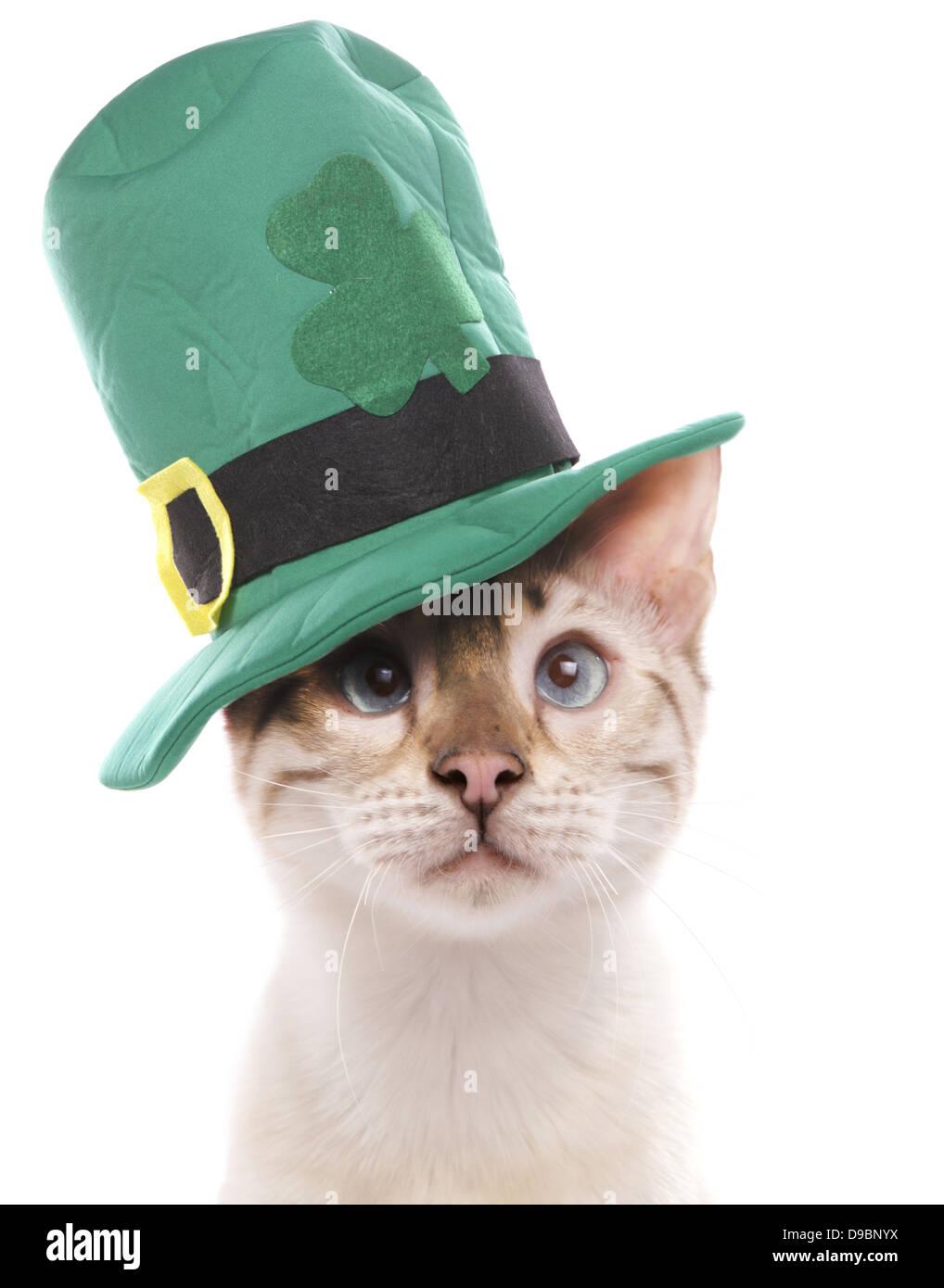 Nett Katze Im Hut Ausmalbilder Kostenlos Zeitgenössisch ...