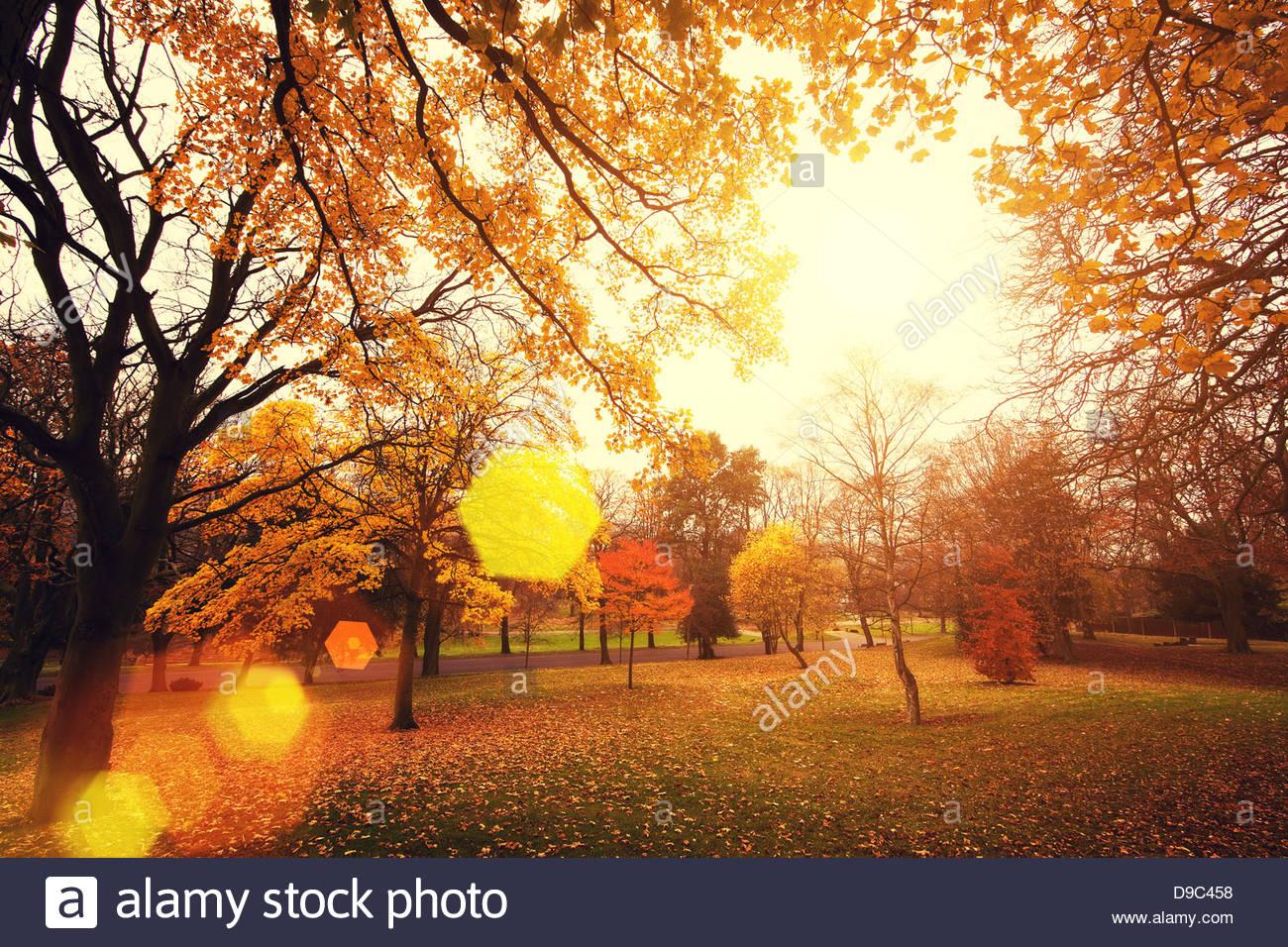 im Herbst Leuchten Stockbild