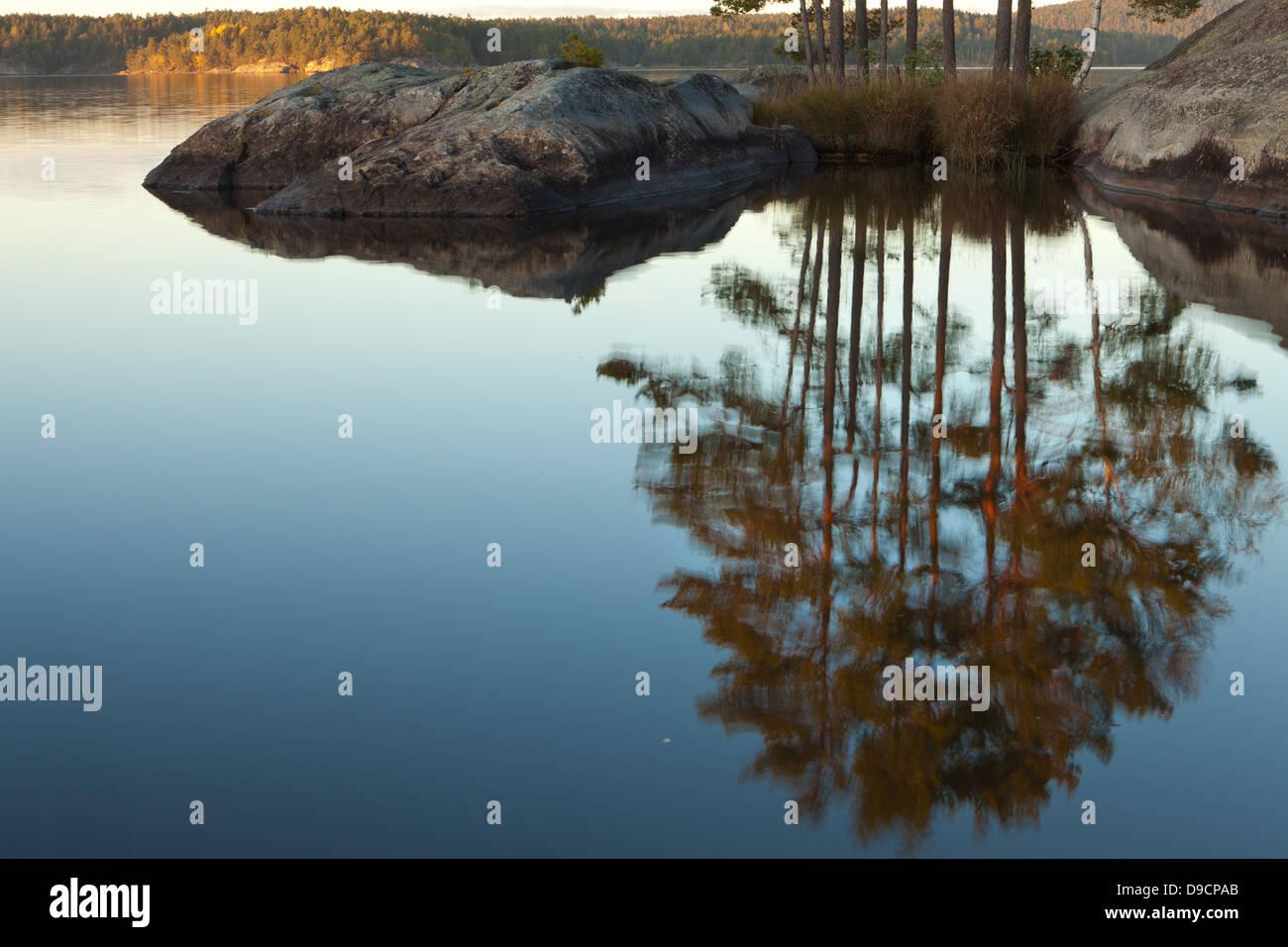 Pinie spiegelt sich in den See Vansjø, an der nordwestlichen Spitze der Insel Østenrødøya, Råde Stockbild