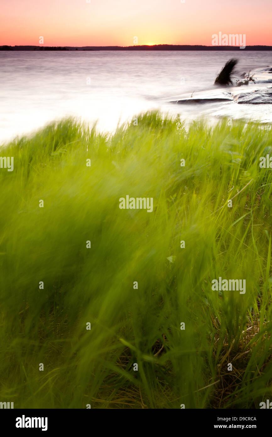 Grüner Rasen auf der Insel Brattholmen in den See Vansjø, Råde Kommune, Østfold Fylke, Norwegen. Stockbild