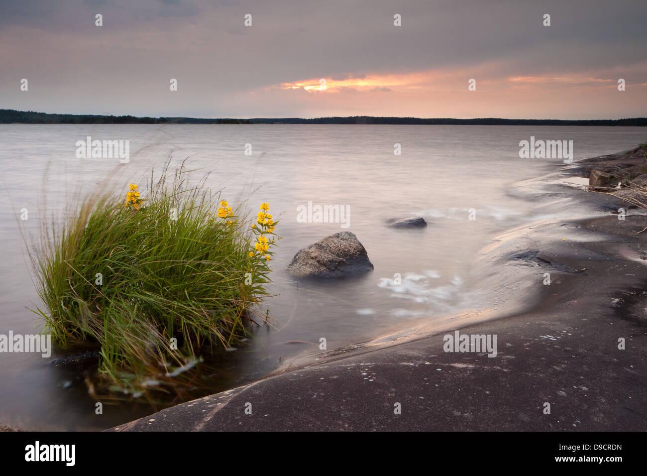 Sommerabend auf der Insel Brattholmen in den See Vansjø, Råde Kommune, Østfold Fylke, Norwegen. Stockbild