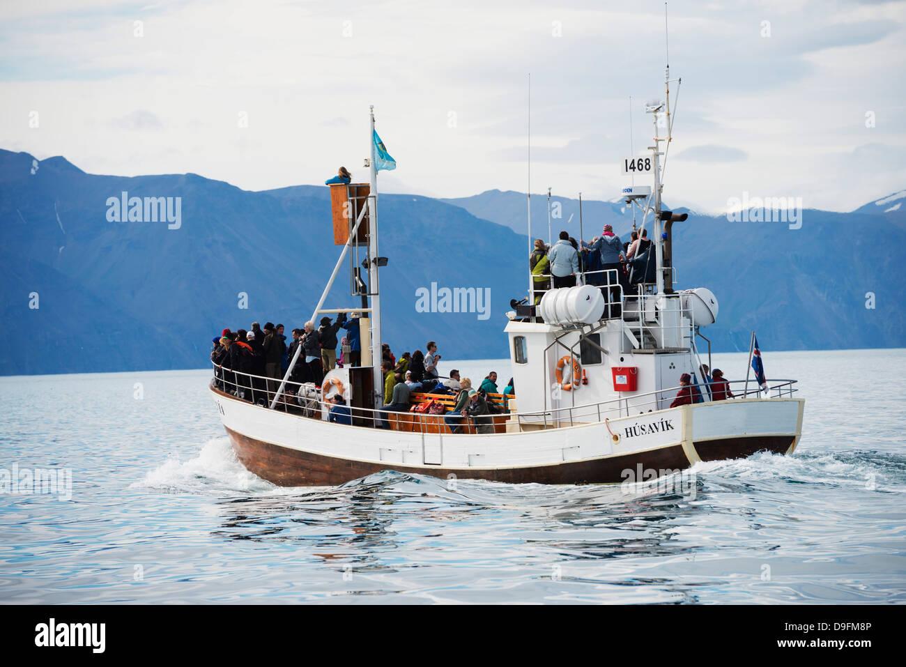 Whale watching Tour, Nordregion, Husavik, Island, Polarregionen Stockbild