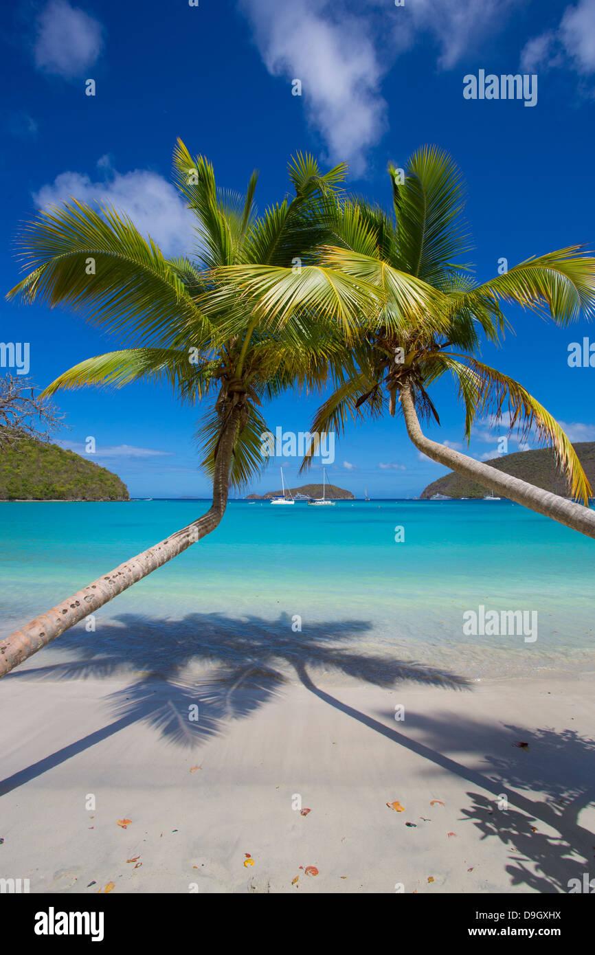 Palmen am Maho Bay Beach auf der Karibik Insel St. John in den US Virgin Islands Stockbild