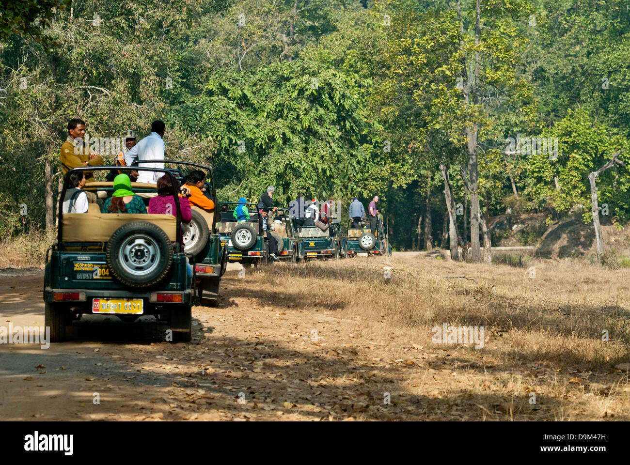 Tiger in Indien zu beobachten Bandhavgarh National Park Stockbild